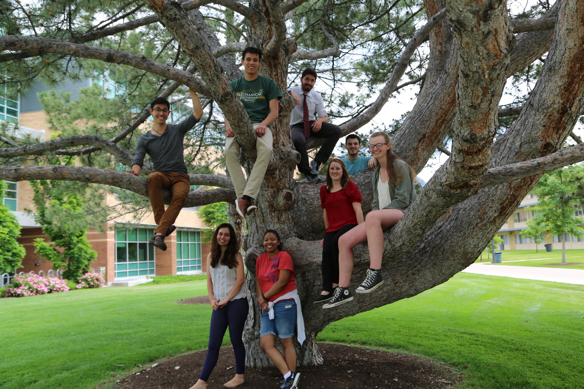 2016 REU Student group hanging out in a tree